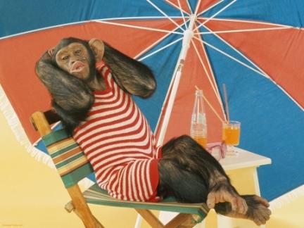 monkey sunbath